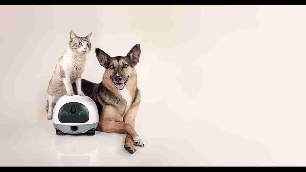 五大最值得購買的智能寵物監視器【2019年最新】五大最值得購買的智能寵物監視器【2019年最新】